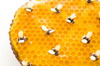 Honey tart