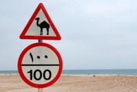 Camel warning road sign