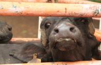 Prisoner Little Buffalo Bull