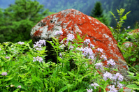 red stone and flower
