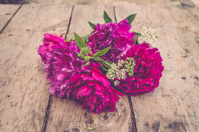 Purple peonies and goutweed on rustic wooden table