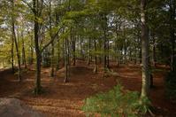 Autumnal dappled woodland scene
