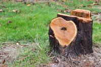Tree stump in the park