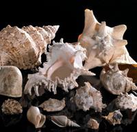sea snail houses
