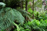 Australian rain forest.