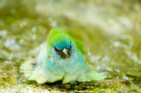 Bathing Bird