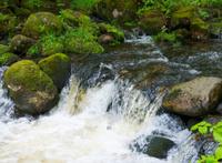 small wilderness waterfall