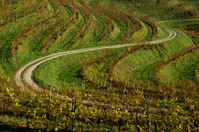 road trough vineyards