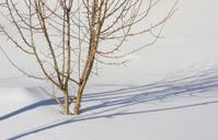 Lonely tree in winter landscape