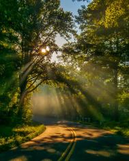 sun rays through trees on road