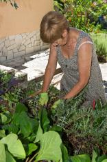 Woman watering her mediteranian garden with hose
