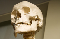 Proud Skull