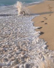 Footprints n the sand # 1