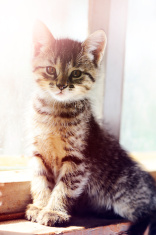 cute kitten at the window.