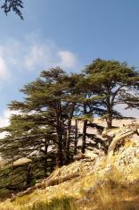 The Cedars of Lebanon near Bcharre, Lebanon