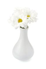 chrysanthemum in vase