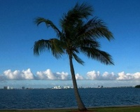 Palm Tree on Bay