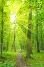 Sun beam in forest