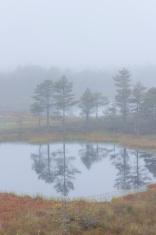 Misty marsh landscape