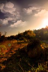 acacia trees and river stream