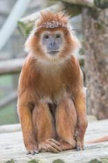 Inquisitive Monkey