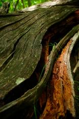 fallen tree wood pattern