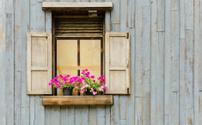 Window with flower pot