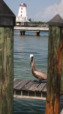 Pelican on a Pier