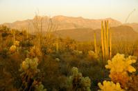 Sonoran Desert at dusk