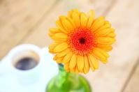 Coffee & flower