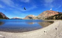 Over the blue lake  predatory condor turns