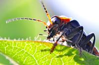 Macro of a bug