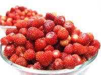 wild strawberry berries fruit dessert with yogurt