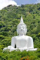 Buddha and nature.
