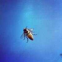 Bee In sky