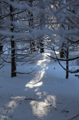 sunny winterday in dark forest