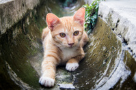 Cat in a Drain