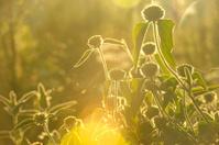 Against Sunlight