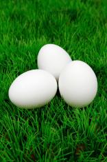 Three eggs on grass