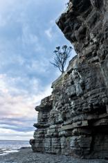 Lonely Tree in Tasmania, Australia