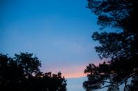 Sunrise through trees