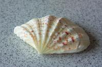 Marine shell