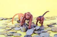 Monkey on Money