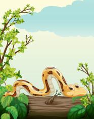 snake on tree