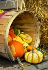 Basket of Gourds