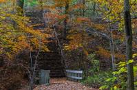 Stairway in an Autumn Forest