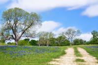 Texas bluebonnet vista along country road