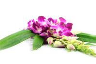 Bouquet of purple orchids.