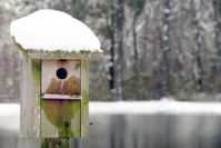 Birdhouse in the Snow