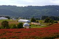 Willamette Valley Crops